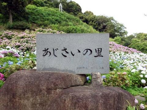 あじさい10.jpg